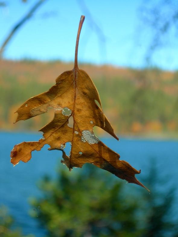 Britton Leaf