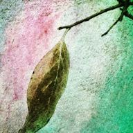 persimmon leaf pink aqua_smaller