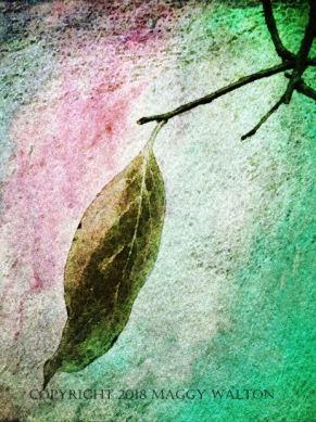 persimmon leaf pink aqua_smaller